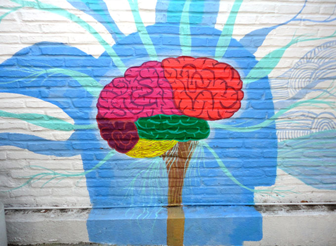 tom14 brain